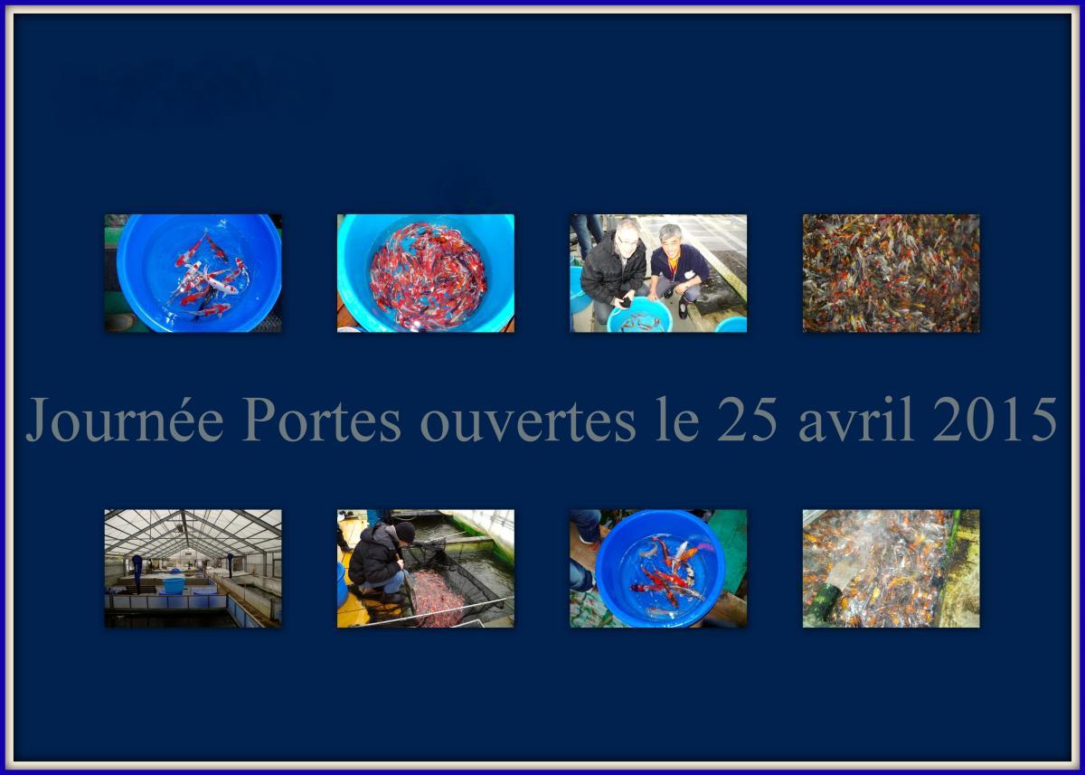 Journ e portes ouvertes 25 avril carpe koi bassin for Elever des carpes