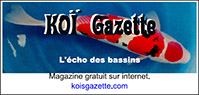 Koi Gazette
