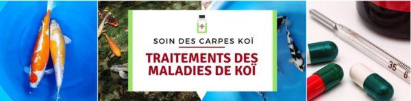Les traitements pour les Maladies de carpe koi