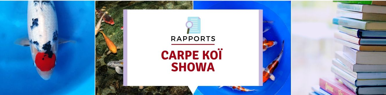 carpe koi showa