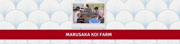 MARUSAKA KOI FARM