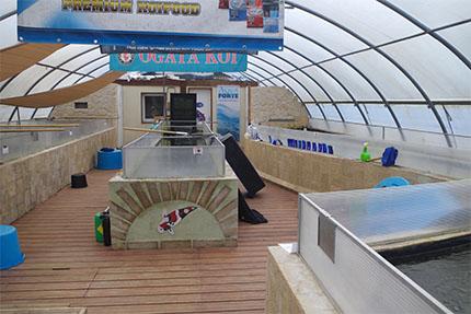 Un peu d histoire sur la pisciculture de saint morat for Vente de carpe koi