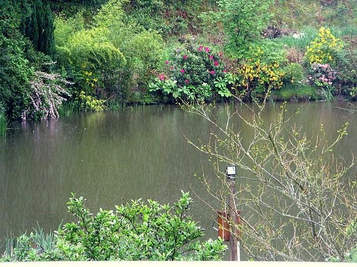étang de pisciculture