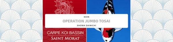 En juin mets un Dainichi dans ton bassin – Original Japanese Koi