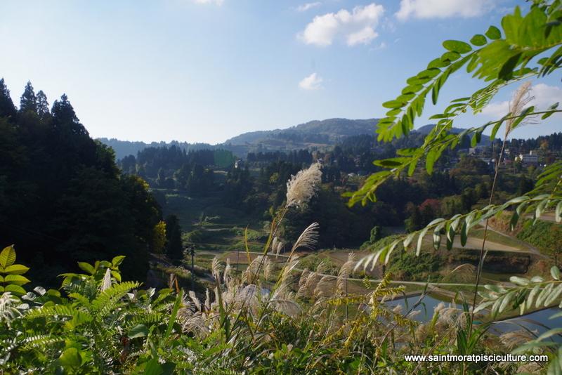 Vallée japonaise