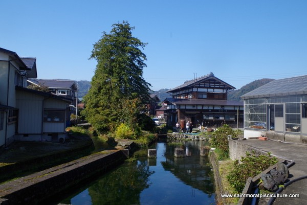 Départ pour le Japon : à la rencontre de nouvelles carpes koï japonaises.