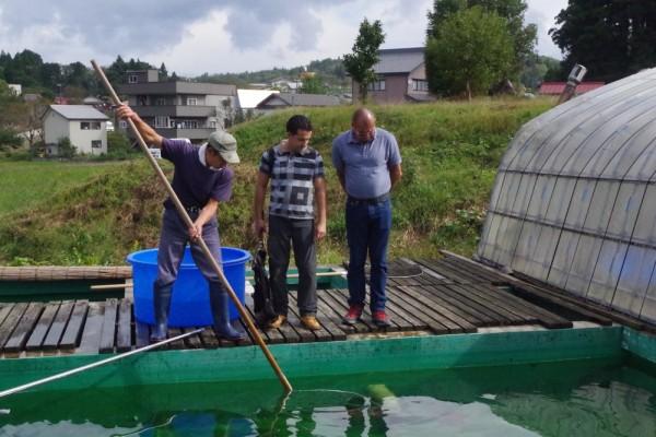 Voyage au Japon : à la recherche de nouvelles carpes Koi
