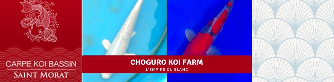 CHOGURO KOI FARM
