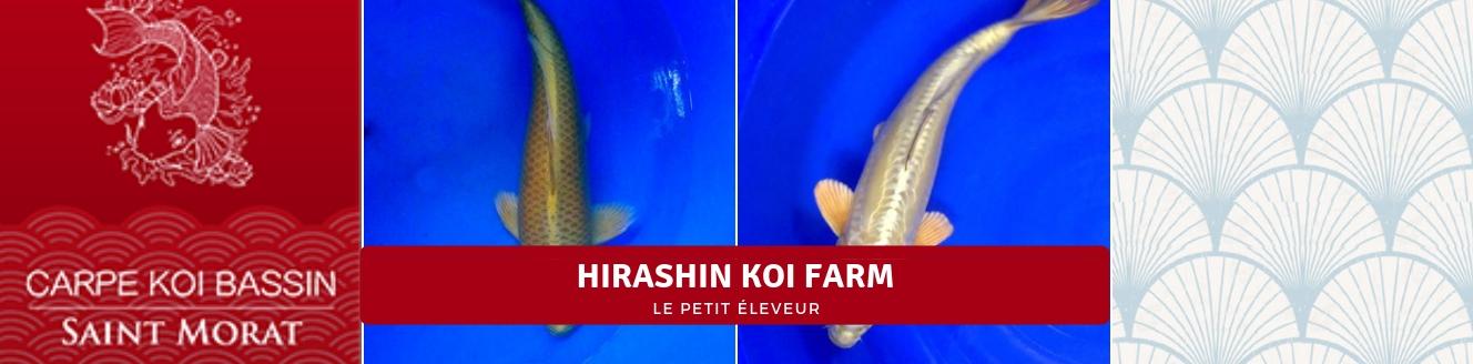 HIRASHIN KOI FARM