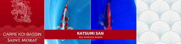 NNBC (Katsumi san)