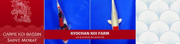 Kyochan koi farm