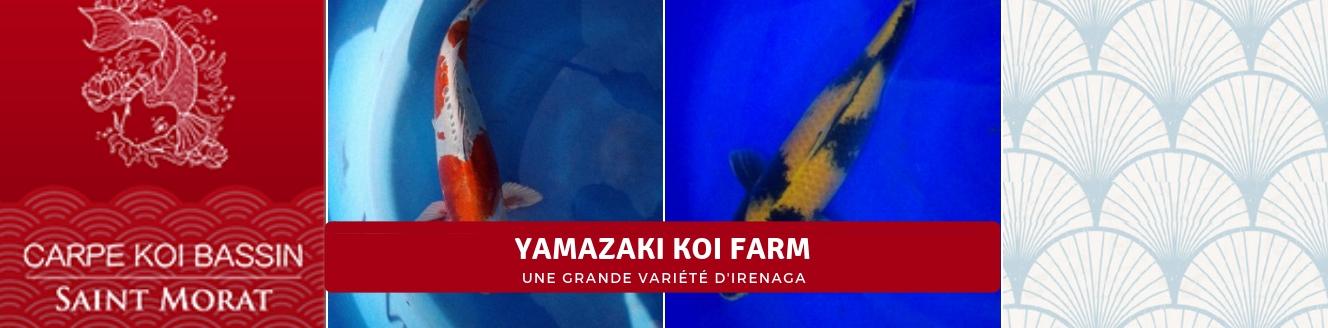 YAMAZAKI KOI FARM