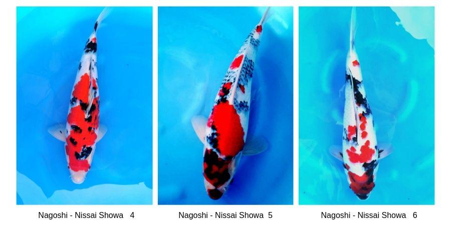 Nagoshi 2