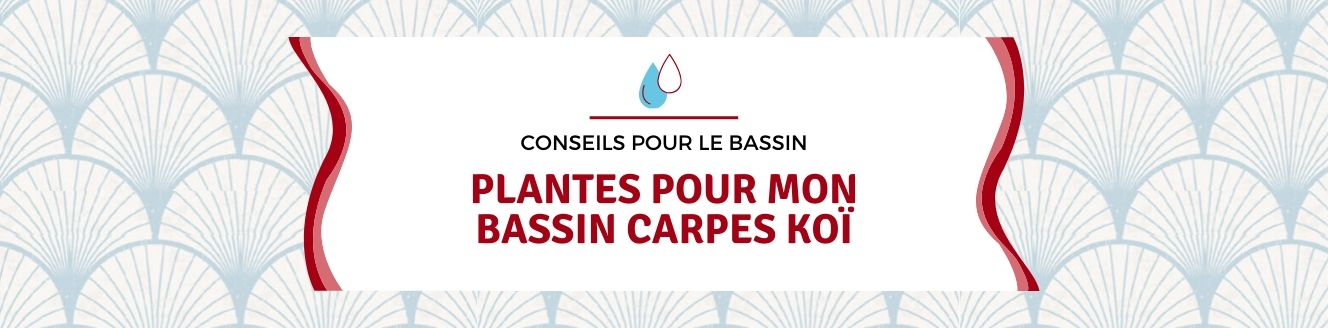 plantes pour bassin carpes koï