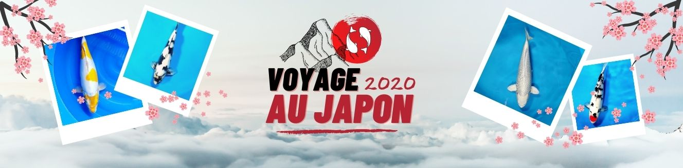 Voyage au Japon 2020 - sélection de koï